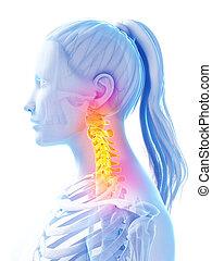 Highlighted upper spine - 3d rendered illustration of pain...