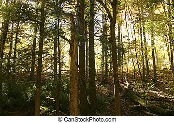 Highlighted woods