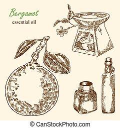 Highly detailed hand drawn bergamot