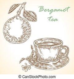 Highly detailed hand drawn bergamot. Vector illustration bergamo