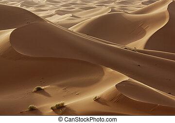 hight sand dunes in the Sahara desert in evening light