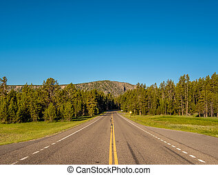 Highway in Yellowstone National Park