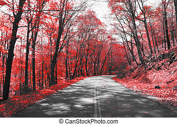 Highway Through Red Forest