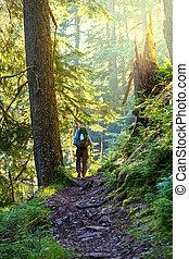 Boy backpacker in forest