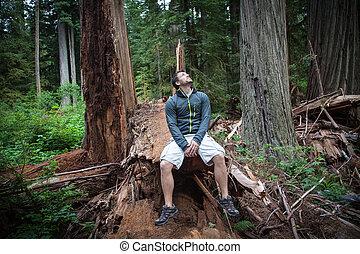 hiker, em, redwoods