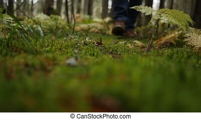 Hiker in boots walks in forest after rain and steps on wet...
