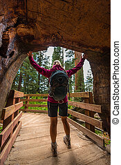 Hiker in Giant Sequoia tree tunnel