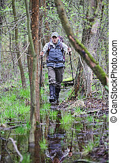 hiker in the  boggy forest walking