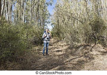 Hiker in the woods - Hiker in the Sardinian of eucalyptus...