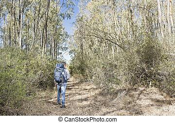 Hiker in the woods - Hiker in the Sardinian eucalyptus...