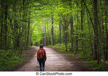 hiker, ligado, floresta, rastro