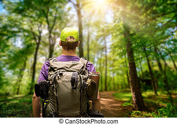 Hiker on a path in the sunny forest