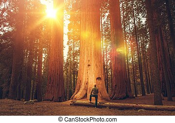 hiker, sequoia, gigante, frente