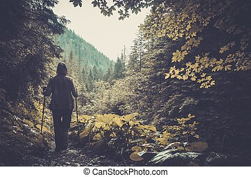 Hiker walking in a mountain forest