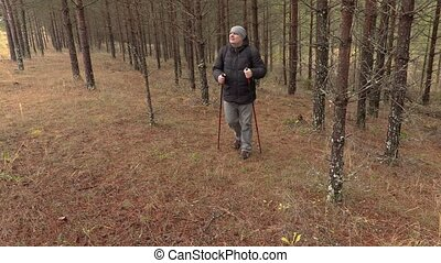 Hiker walking in pine forest