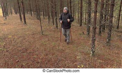 Hiker walking in pine forest