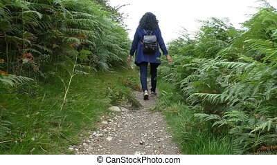 Hiker walking path between ferns - Woman hiker walking the...