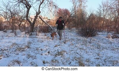 Hiker with hiking poles and dog walking in garden in winter
