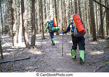 Hikers on the forest path