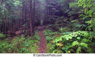 FPV of a hike along a narrow, sloping trail through dense rainforest in the Ukrainian Carpathian Mountains.