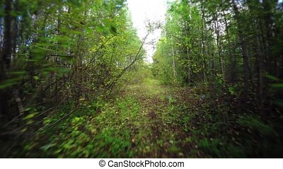 Hiking a Nature Trail through a Wooded Wilderness Area....