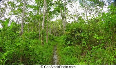 """Hiking along a Trail - """"Abstract, timelapse video of a high..."""