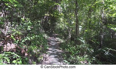 Hiking along a Tropical Rainforest Wilderness Trail in...