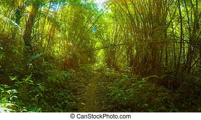 Hiking amongst the Bamboo Stands