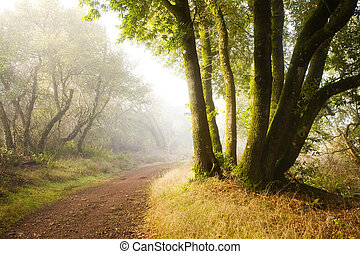 Hiking at Dawn - Magical Hiking Trail at Dawn, on typical...