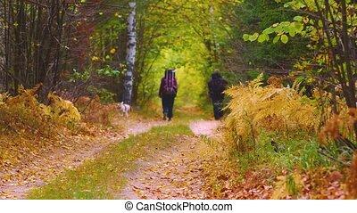 hiking, concept., backpacks, road., rozluźnić, turyści, dwa, pieszy, las