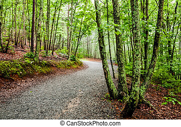 hiking forest path through thick woods