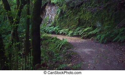 hiking, las