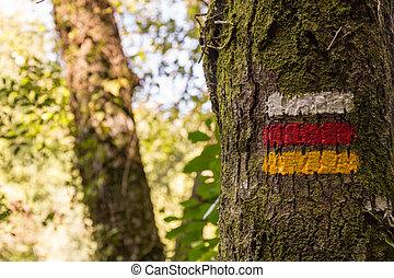 hiking marks on tree marking correct direction