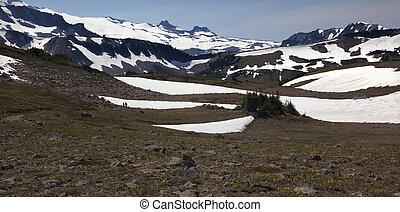 Hiking Mount Rainier Sunrise Yellow Wildflowers Snow Fields