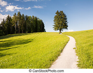 Hiking path at a lonely tree
