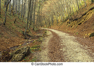 Hiking path in the forest