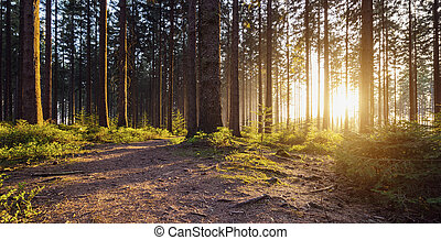 Hiking Path in to the Forest - trail in to the forest at...