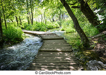 Hiking Path on a Wooden Trail
