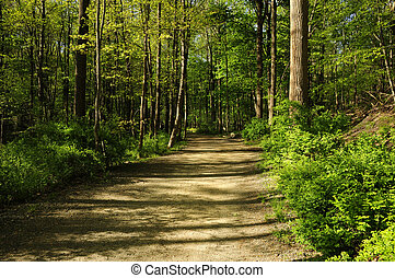 Hiking path through a forest - A hiking path through a ...