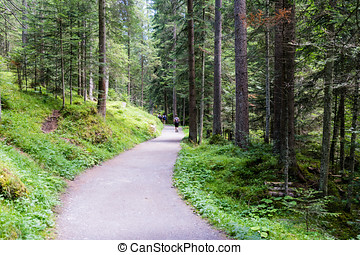 Hiking path through the forest