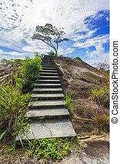 hiking the granite stairway in the jungle, mahé, seychelles 2