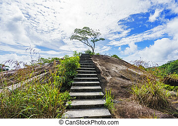 hiking the granite stairway in the jungle, mahé, seychelles 3