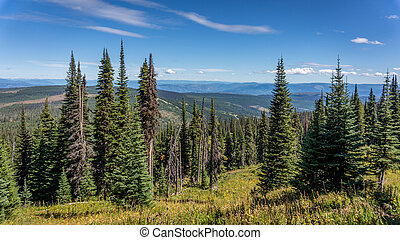 Hiking through alpine meadows