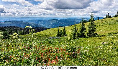 Hiking through Helleboris Flowers