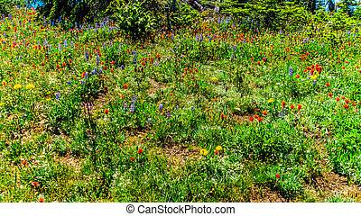 Hiking through the meadows covered in wildflowers in the high alpine