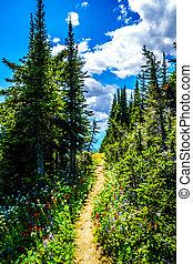 Hiking through the mountain alpine meadows with wild Flowers on Tod Mountain