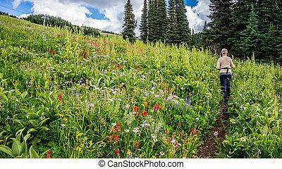 Hiking through the Wild Flowers