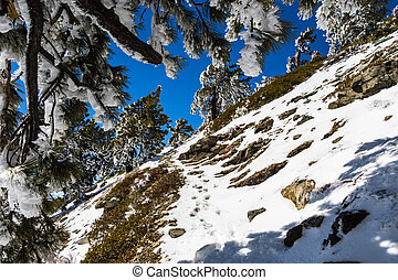 Hiking to the top of Mount San Antonio (Mt Baldy) on a narrow trail covered in snow on a sunny spring day, Los Angeles county, south California