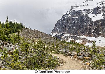 hiking traccia, in, il, montagne rocciose, -, jasper np, canada