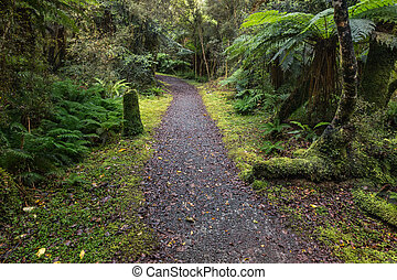 track leading through temperate rainforest in New Zealand -...